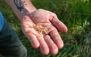 Native plant seeds